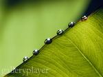 Leaf - GalleryPlayer.jpg